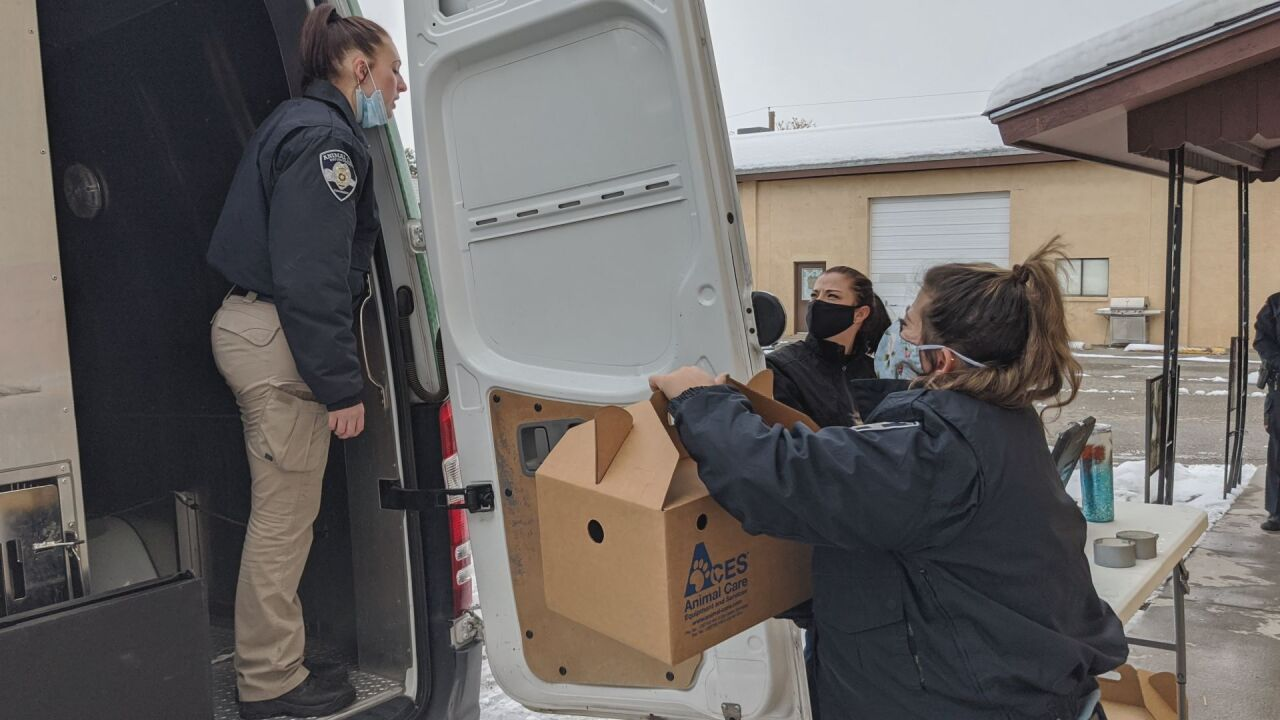 Cats seized from rescue in Pueblo