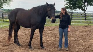 Making A Difference: Garrard Co. Horse Farm Offers Program For Veterans