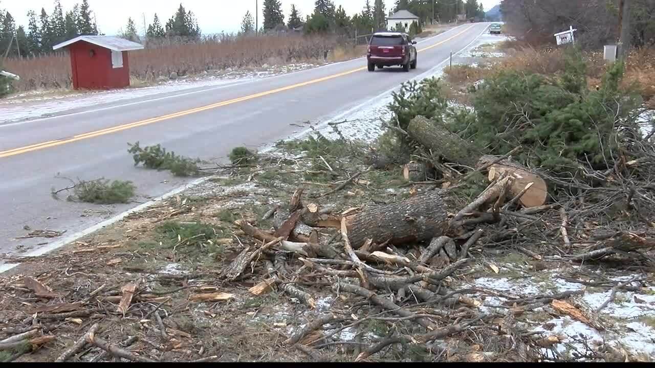 Highway 35 downed trees.jpg