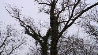 thetree.jpeg
