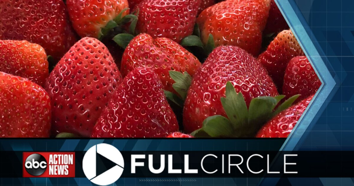 The changing future of Plant City and how the Strawberry Festival is the heartbeat