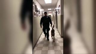 Video extra: Billings police send K9 greetings to sick Wisconsin girl