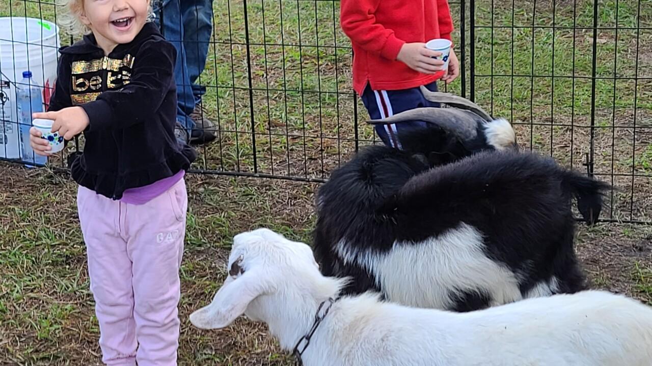 1st United Methodist Church petting zoo