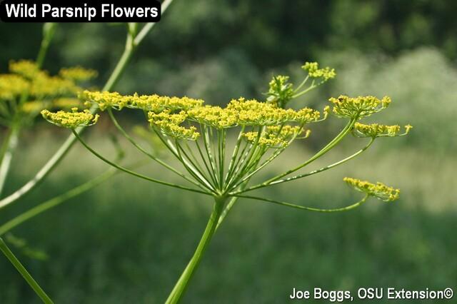 Flower 2007 1.jpg