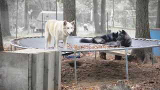 wolf sanctuary.jpg