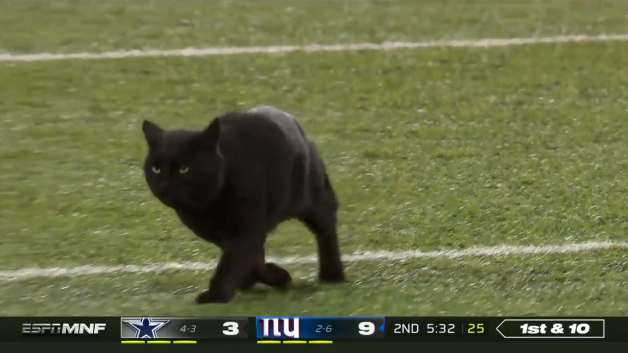Black Cat Takes The Field During Monday Night Football