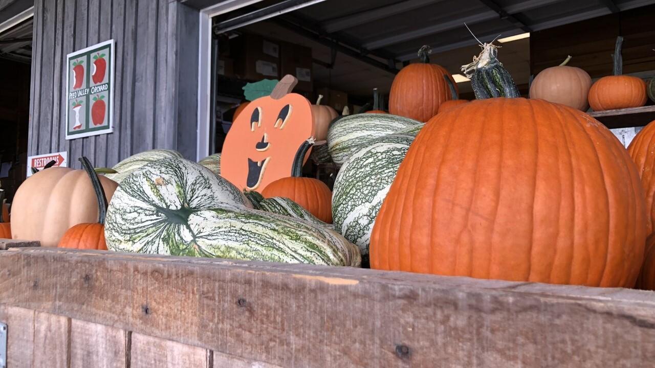 thumbnail_pumpkin.jpg