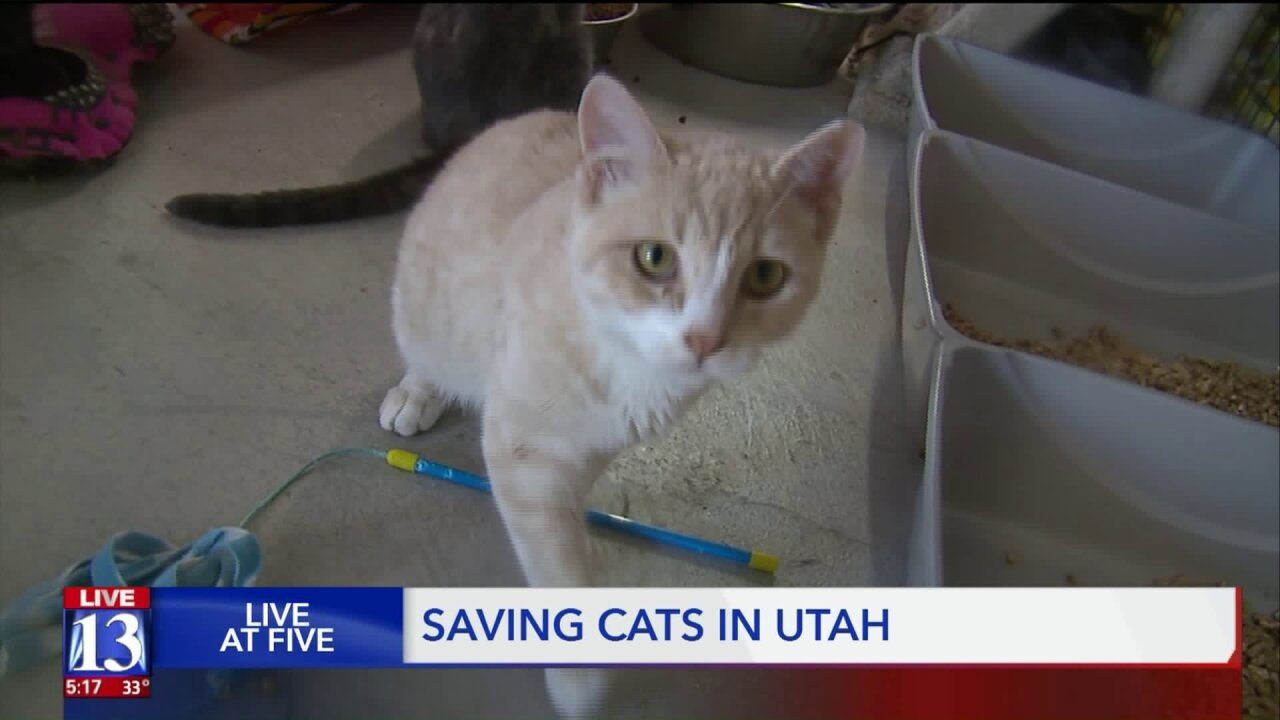Eagle Scout project, animal rescue program tackle cat crisis inUtah