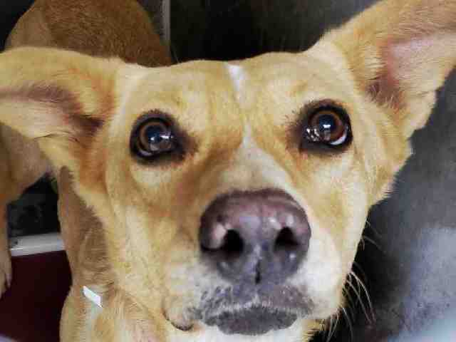 PHOTOS: 20 pets up for adoption in the Valley (12/5)