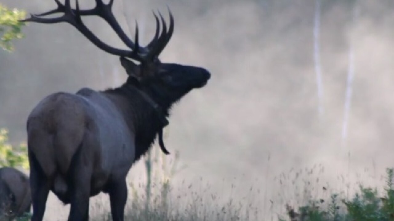 DNR picks 4 people to participate in first elk hunt