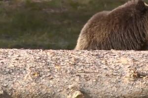 A Wilder View: What is predator instinct?