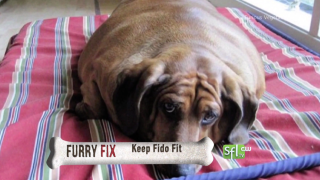 Keep Fido Fit- Furry Fix