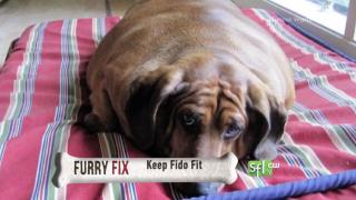Keep Fido Fit- FurryFix