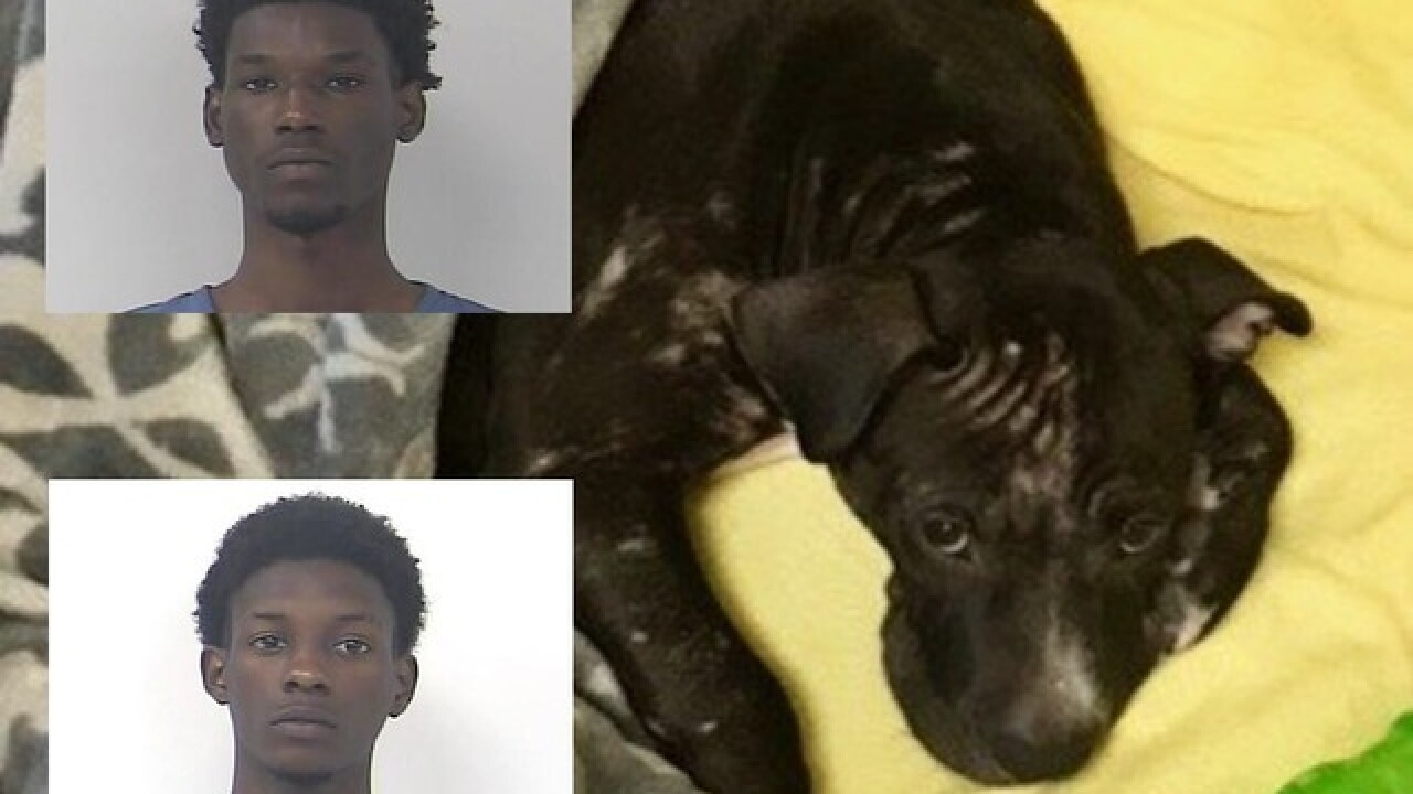 Dog beaten and kicked in Fort Pierce, men arrested
