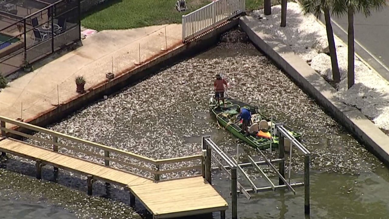 Pinellas-County-ramps-up-fish-kill-clean-up-WFTS-071221.jpg