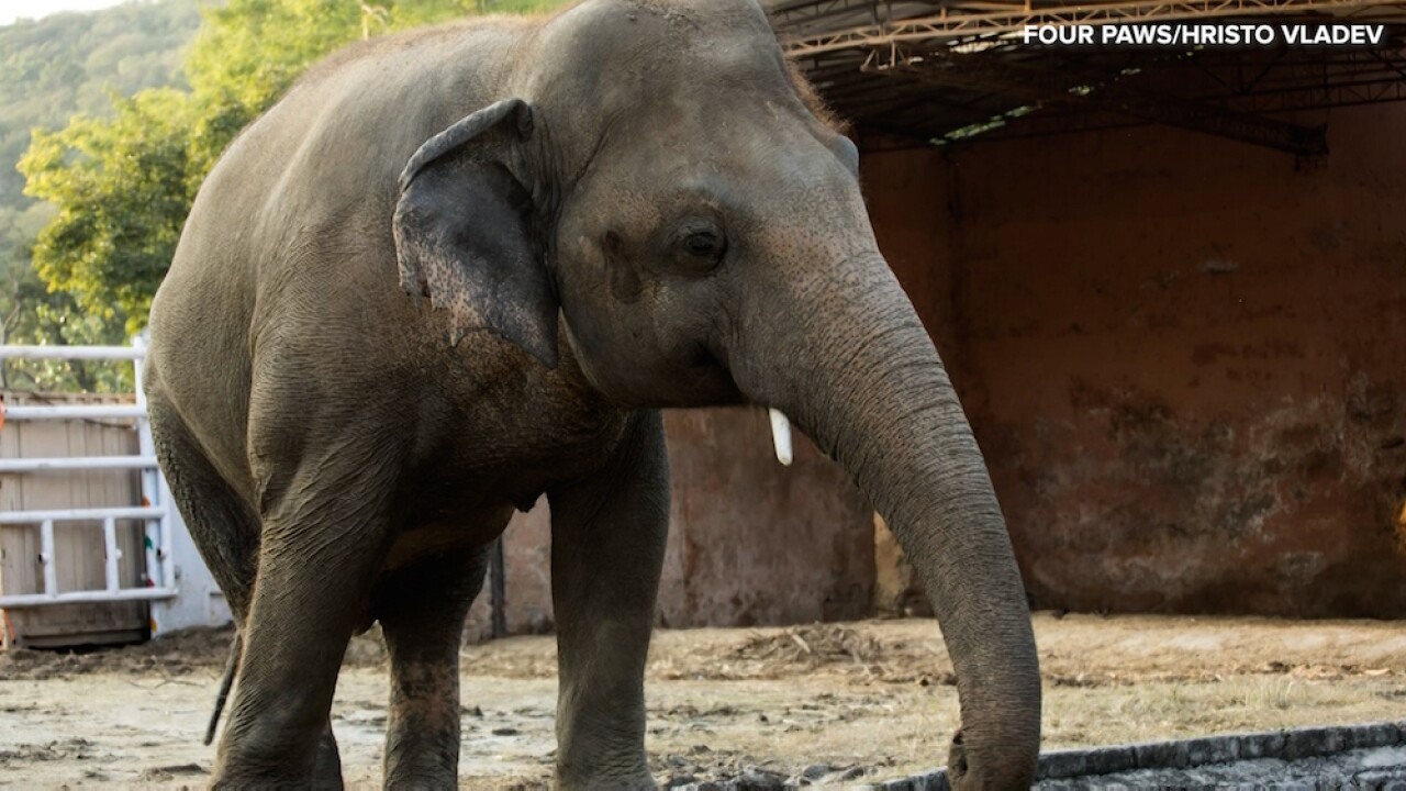 Thanks to Cher, 'world's loneliest elephant' starts new life at elephant sanctuary