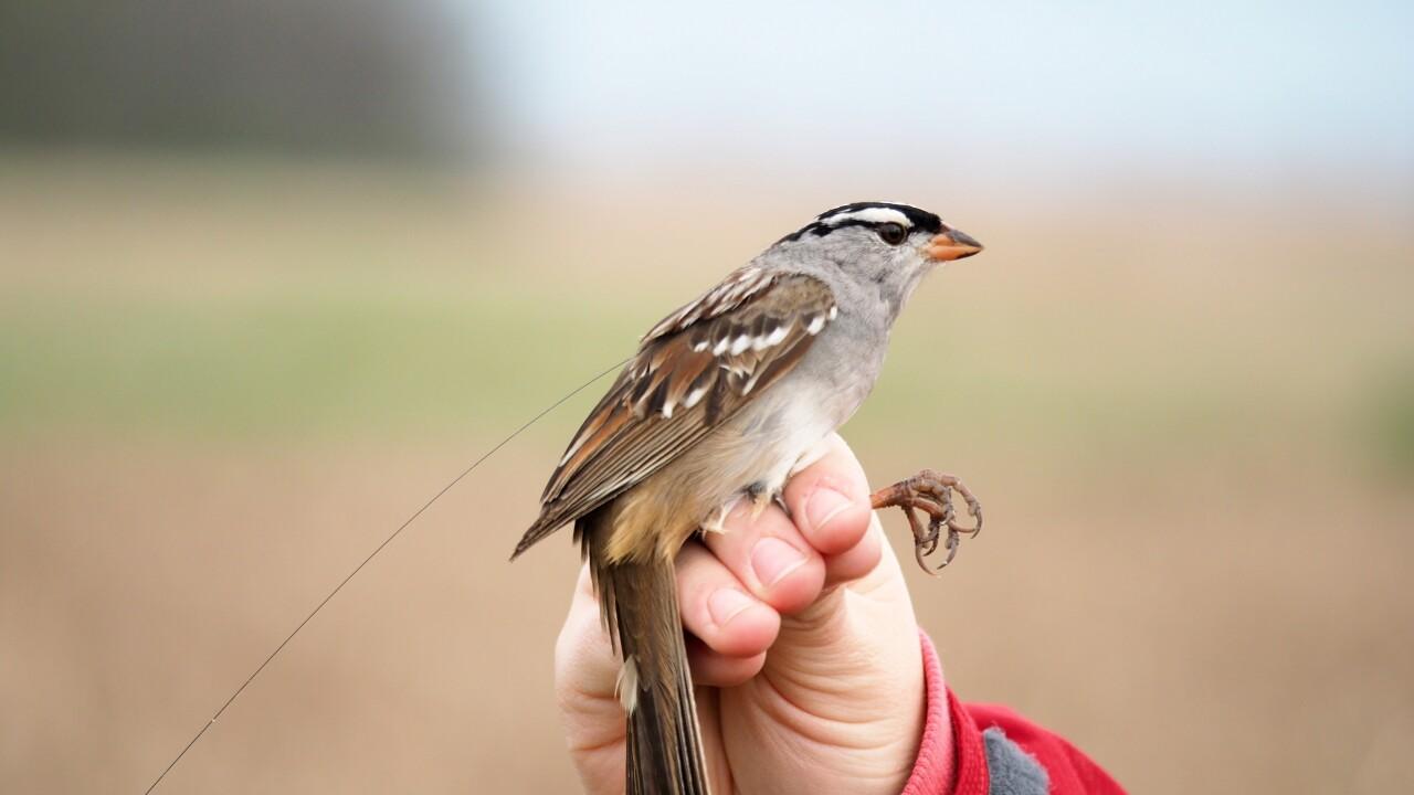 Bird Deaths-Pesticides