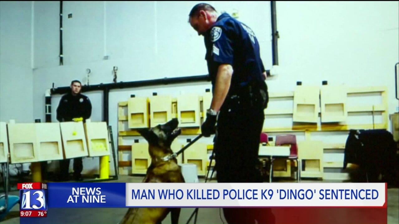 Man sentenced for killing Unified Police K-9 'Dingo'