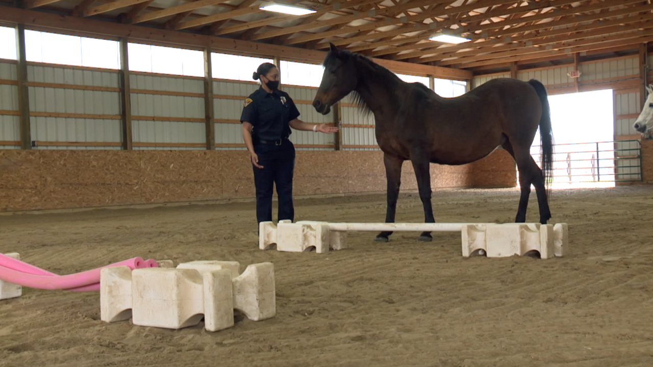 Equine therapy helps Cleveland police officer cope with department tragedies