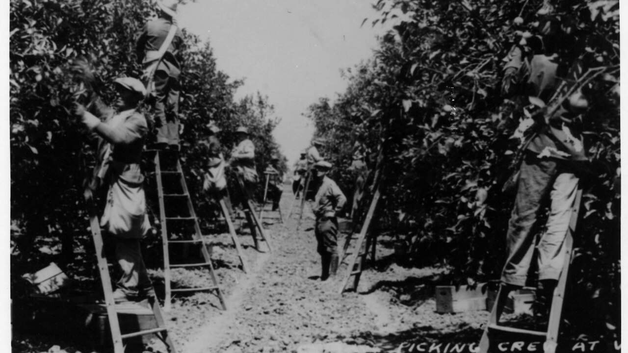 Lemon Groves.jpg