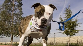 Springfield narrowly approves controversial pit bull ban