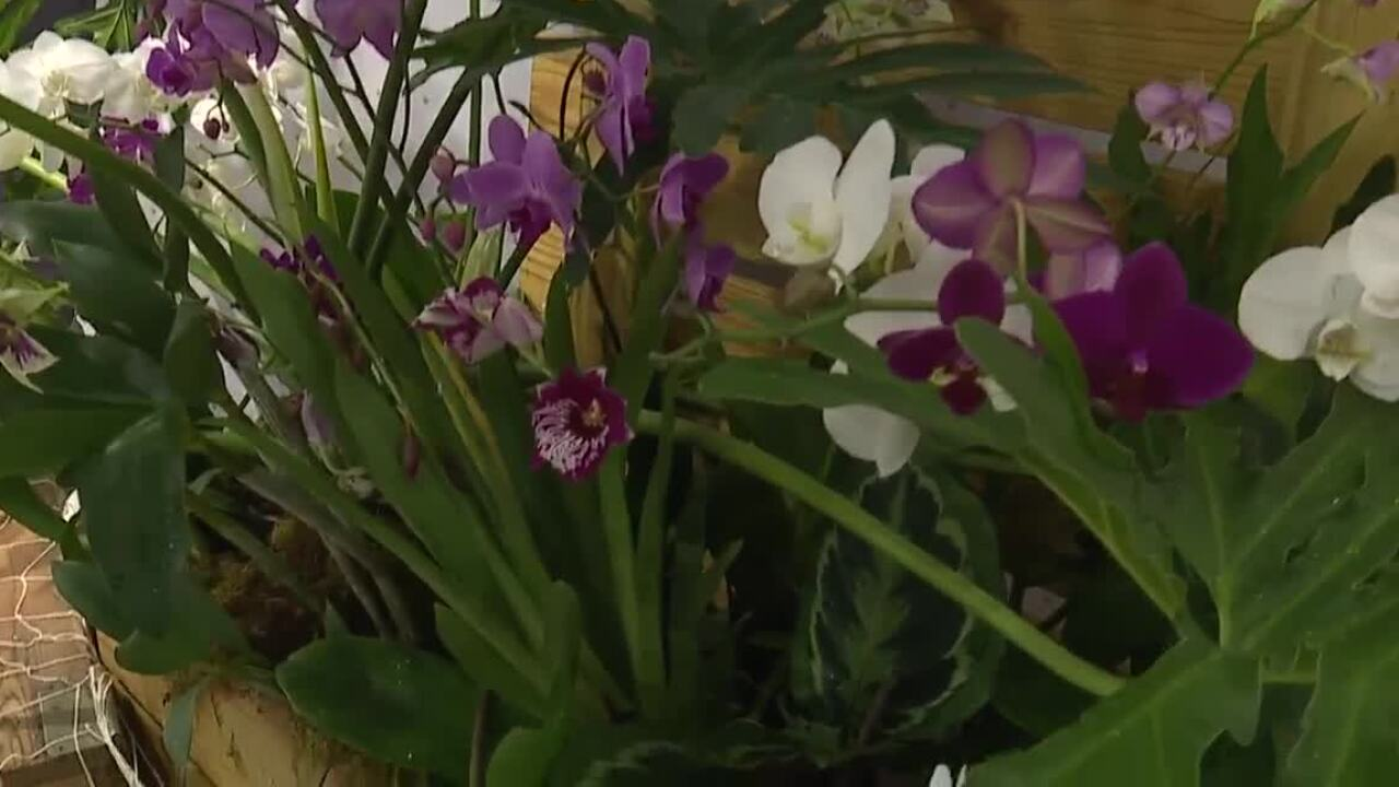 Orchids Forever exhibit