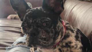 bailey rover app missing dog.jpg