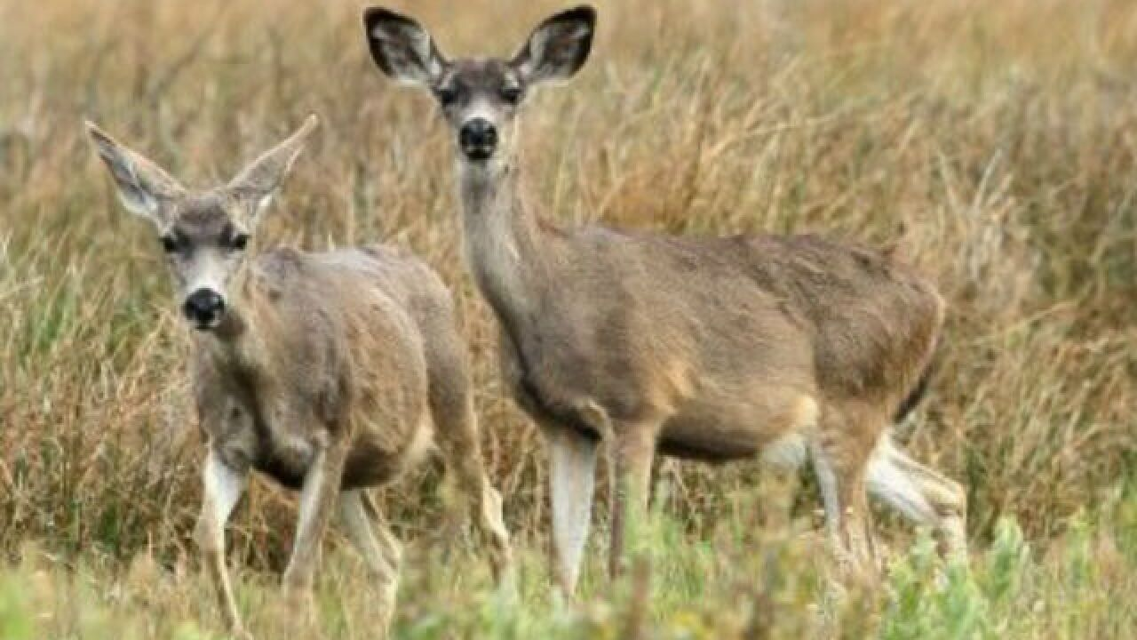 Deer hunters can not use rifles on private land