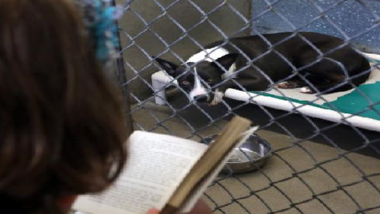 Florida inmates to cuddle shelter dogs during fireworks celebrations.png