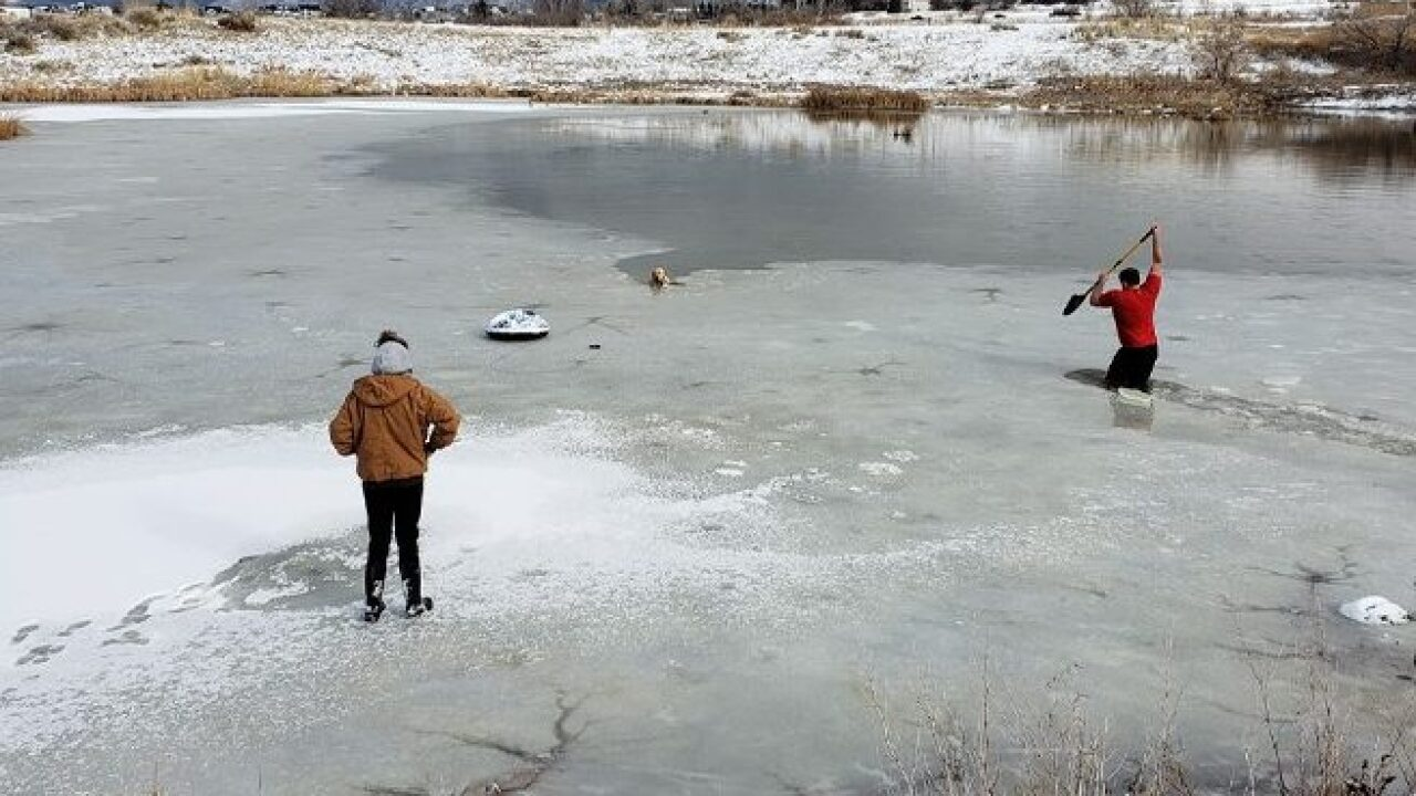 Man cuts through icy pond to rescue stranded dog