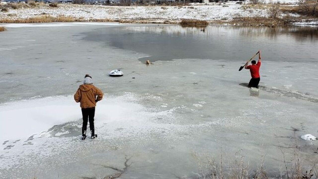 Man cuts through icy pond to rescue strandeddog