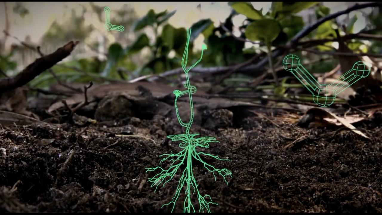 Salk Institute Harnessing Plants Initiative
