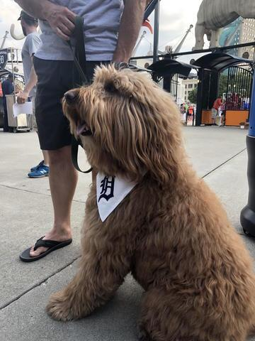 Tigers host second Bark at the Park night of 2018