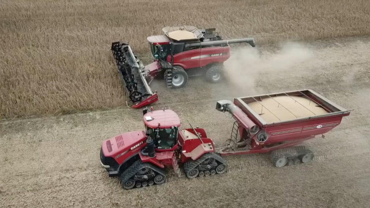 Ohio soybeans 2