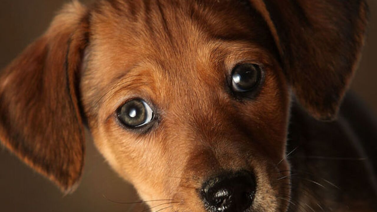 Puppies from national pet store chain sicken 39 people