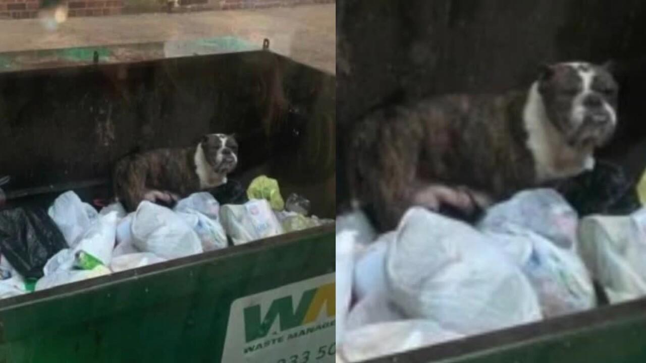 DumpsterPup.jpg