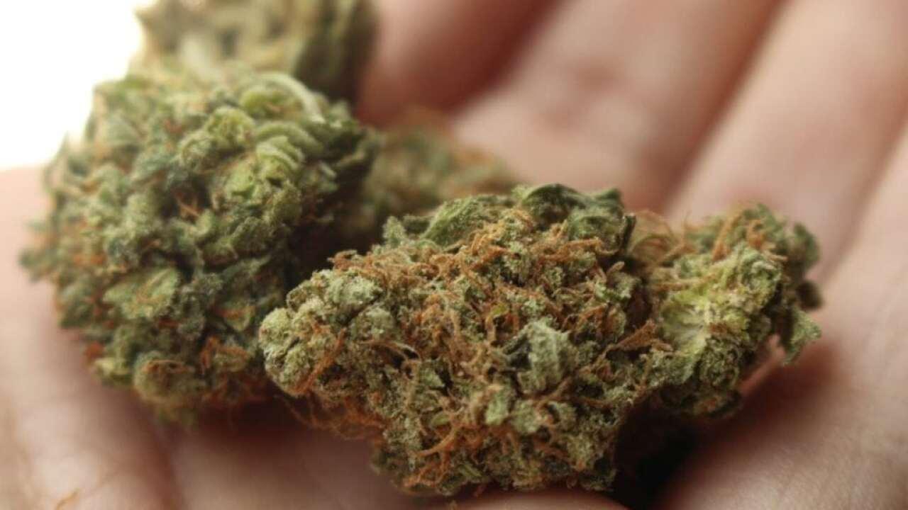 Will Michigan legalize recreational marijuana?
