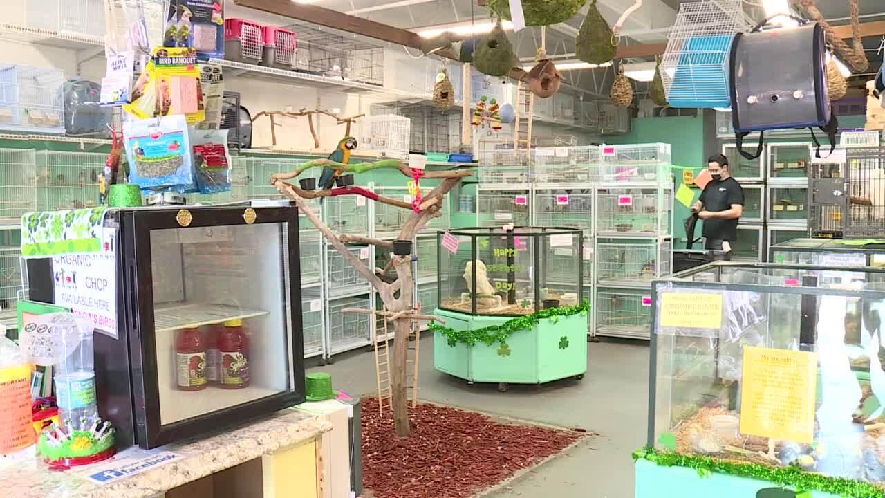 Interior of Brenda's Birds