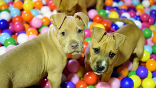 Puppies2.png