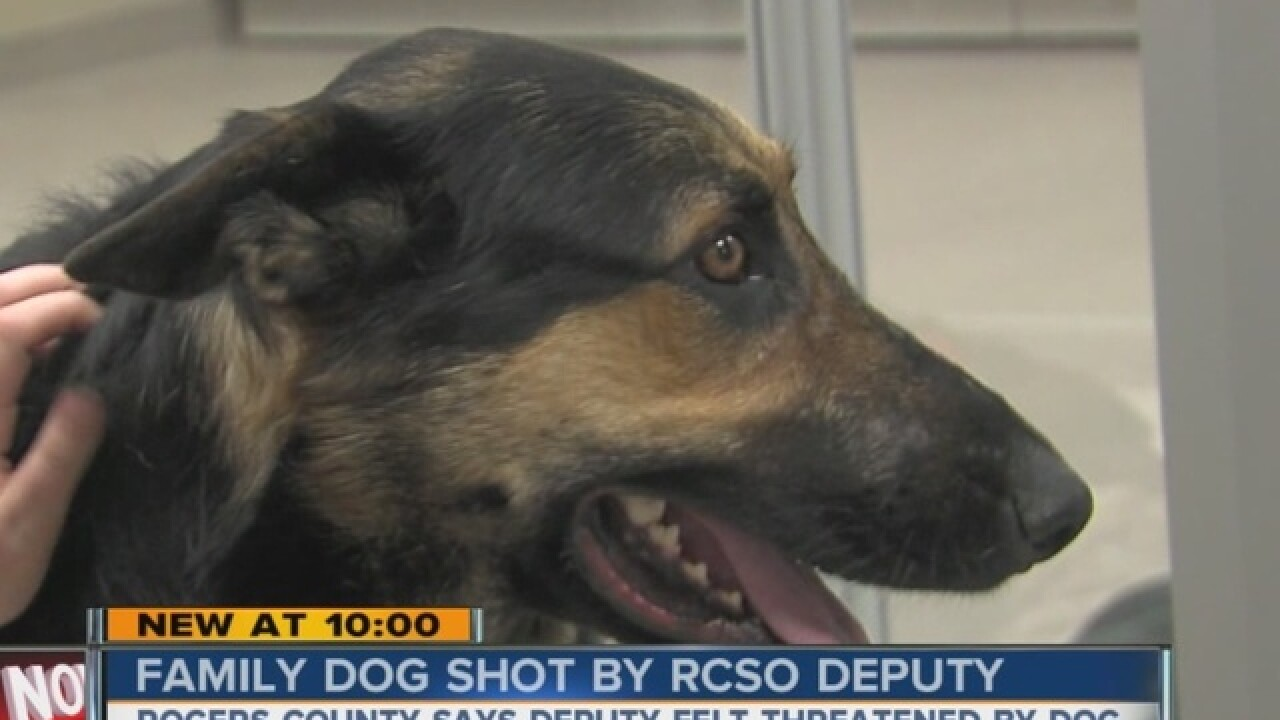 Family finds dog bleeding from gunshot wound...
