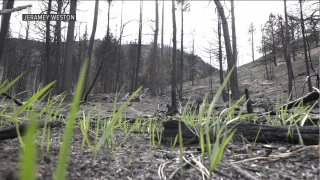 forest fires.png