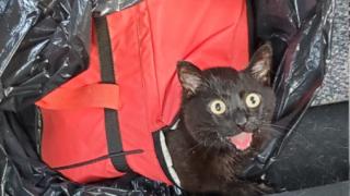 Fearless Kitty Rescue Juliane.PNG