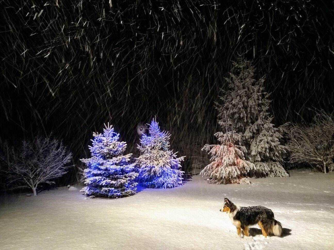 Marshall Bennett snow.jpg