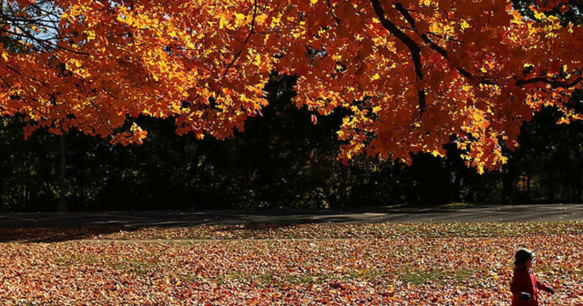 New York Fall Foliage 2020 Predictions.This Is When Michigan S Fall Colors Will Peak In 2019