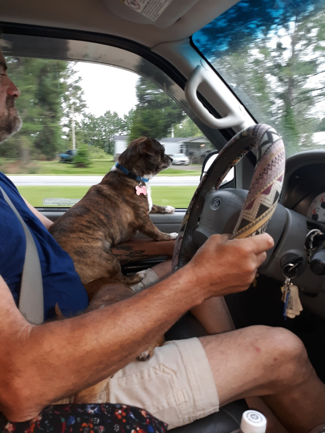 Flash loves to ride, he will travel anywhere in the big or little truck..jpg