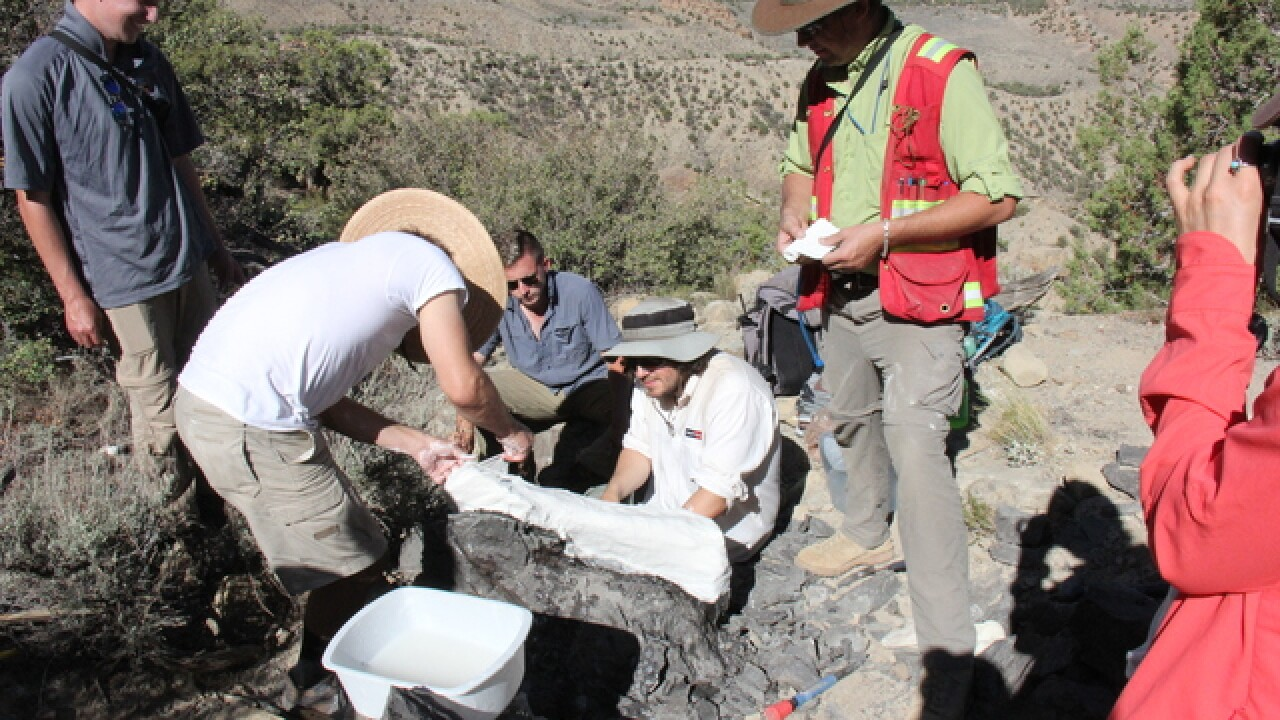 Likely hadrosaur fossil found on Palisade trail