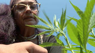 N.E. Ohio hemp farmers face difficult hurdles in 2nd growing season