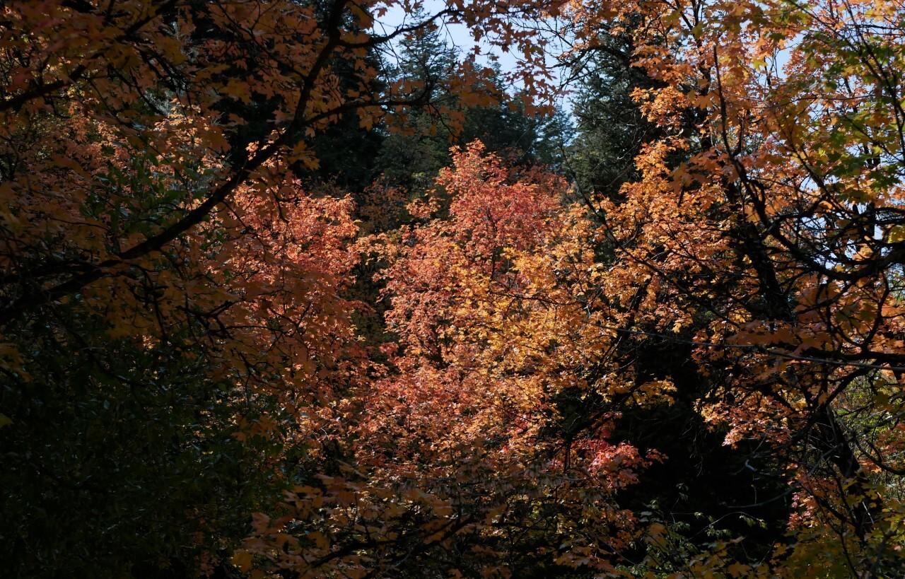 Marguerite Roberts Millcreek Canyon (3).jpg