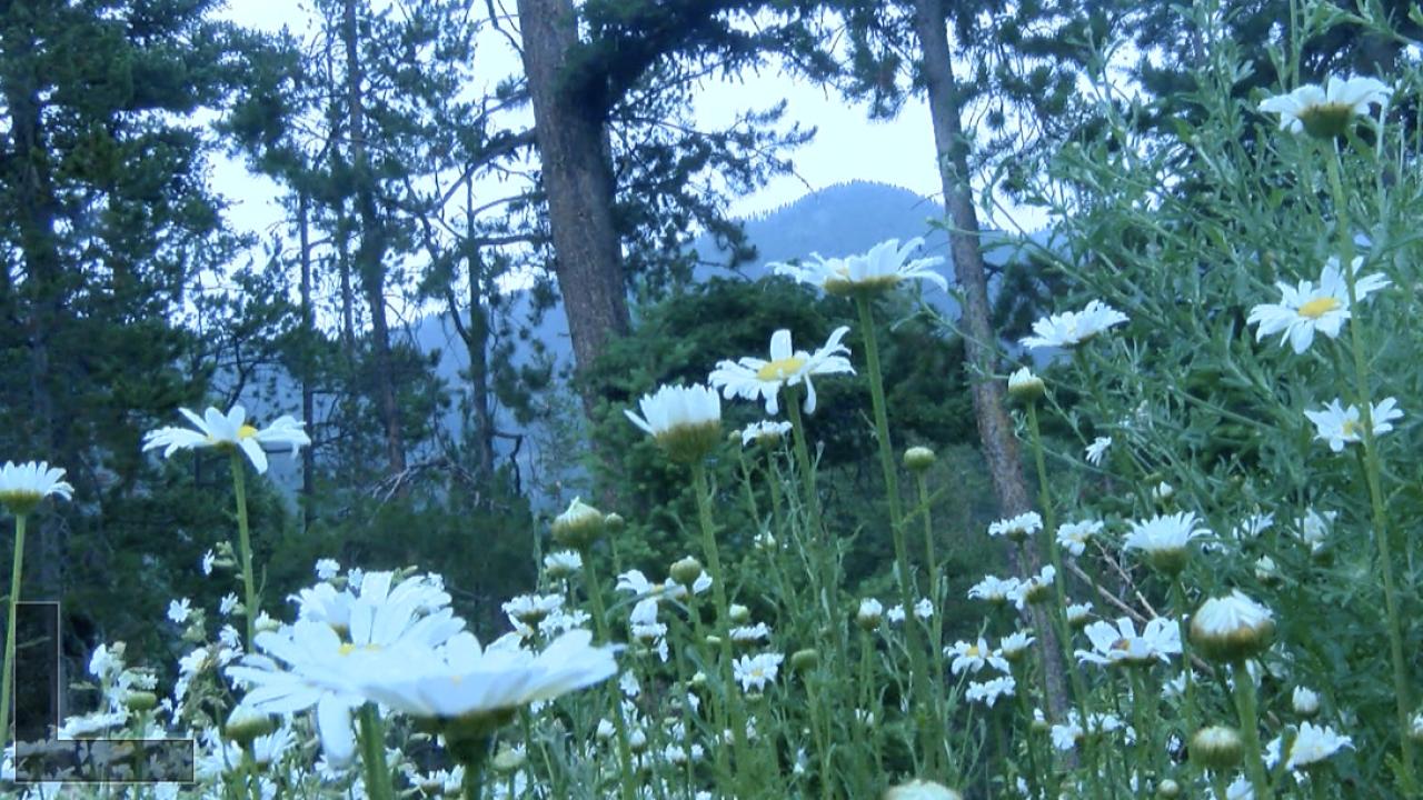 Screen Shot 2021-07-05 at 3.40.23 PM.png