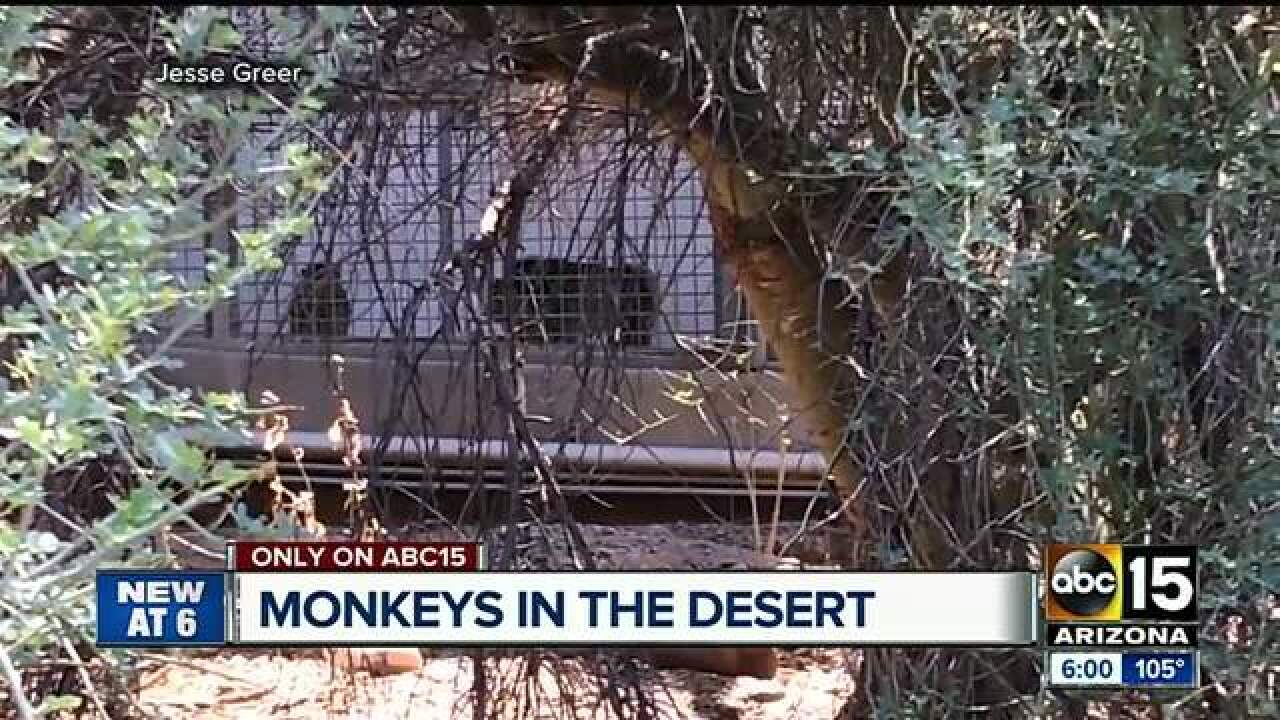Monkeys found living in Mesa facility. Why? How?